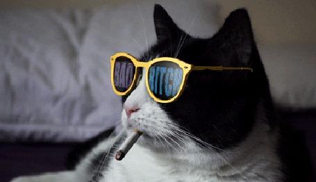 Анимация Курящий кот в очках с надписью BAD BITCH