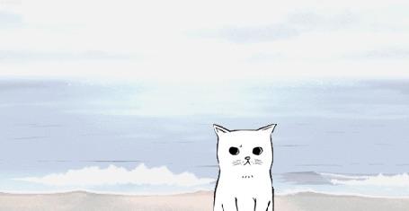 Анимация Котик на морском берегу