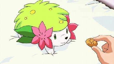 Анимация Покемона Шеймин / Shaymin из аниме Покемон / Pokemon кормят печеньем