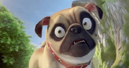 Анимация У мультяшного пса бегают глаза, мультфильм The Nut Job 2 / Реальная белка 2