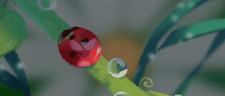 Анимация Божья коровка на стебельке с каплями воды