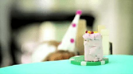 Анимация Хомячок съедает на свой День рождения законный кусочек торта