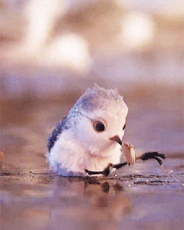 Анимация Птенец смешно падает на спину, хватая лапками и клювом пищу, мультик PiPer - So Cute Bird