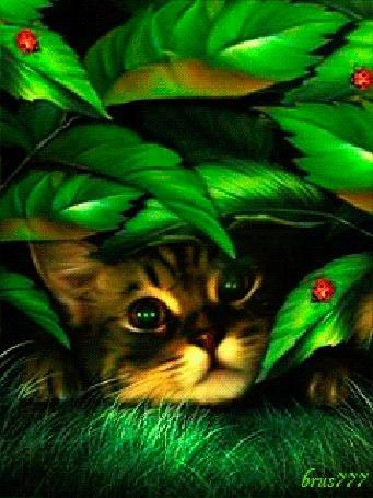 Анимация Кот выглядывает из-за зеленых листьев, на которых сидят божьи коровки, brus777