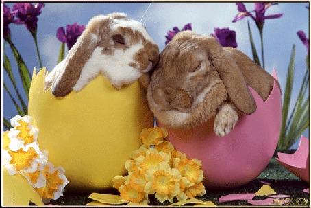 Анимация Пасхальные кролики в розовой и желтой скорлупке