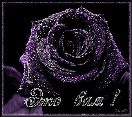 Анимация Фиолетовая мерцающая роза (Это вам), by Tim2ati
