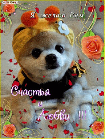 Анимация Премиленькая собачка в окружении плавающих сердечек и душистых оранжевых роз (Я желаю Вам Счастья и Любви!), by Chloe