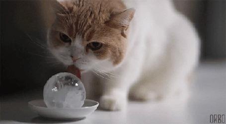 Анимация Кошка лижет ледяной шарик, by ORBO