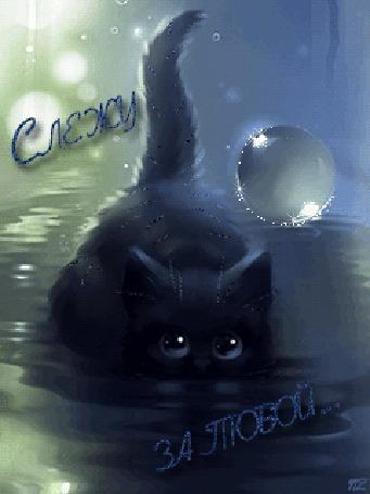 Анимация Черный котенок притаился в воде (Слежу за тобой), by NZ