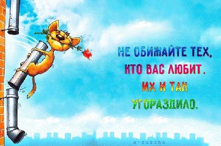 Анимация Кот с розой во рту на сломанной трубе (Не обижайте тех, кто вас любит. Их и так угораздило.), by a-zarina
