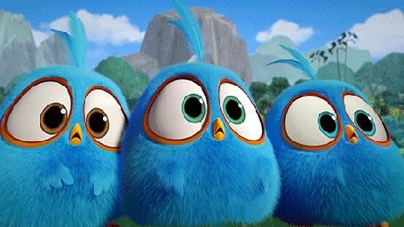 Анимация Голубые птенцы из мультфильма Angry Birds / Злые птицы