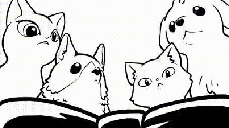 Анимация Собаки и кошки бьются за бантик, но увидев что маленкая собачка ничего не видет из за шерсти, дают бантик ему