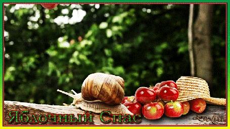 Анимация В саду падают яблоки. На бревне лежит шляпа с яблоками и ползет улитка (Яблочный Спас)
