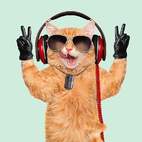 Анимация Танцующий кот с наушниками