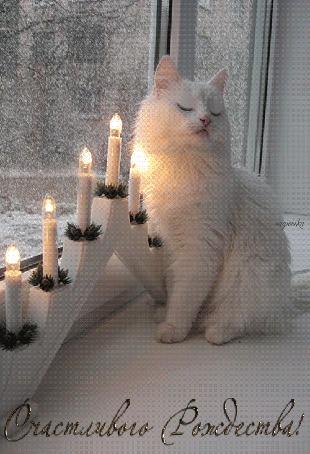 Анимация Белая кошка сидит на подоконнике (Счастливого рождества!), by Надюшка