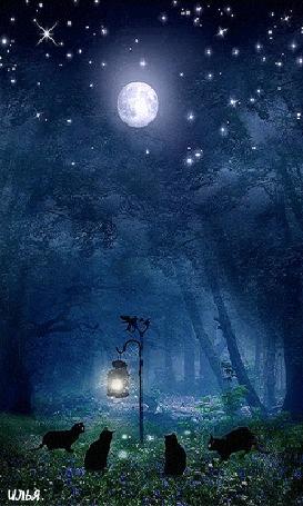 Анимация Четыре черных кота собрались на лесной поляне, под звездным небом и луной