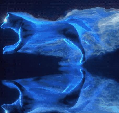 Анимация Бегущий голубой волк и его отражение