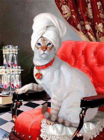 Анимация Кошка в кресле