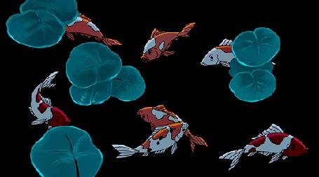 Анимация Плавающие карпы кои среди листьев лотоса
