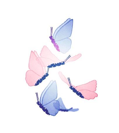 Анимация Голубые и розовые бабочки порхают на белом фоне