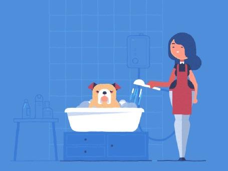 Анимация Девушка купает недовольного бульдога, сидящего в тазу, by Ryan Rumbolt