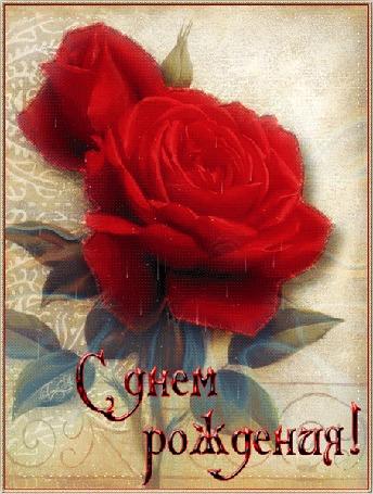 Анимация Красные розы с капельками (С днем рождения!)