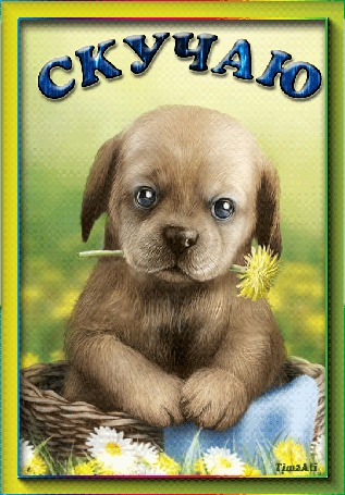 Анимация Маленькая собачка в корзинке с цветочком (Скучаю), by tim2ati