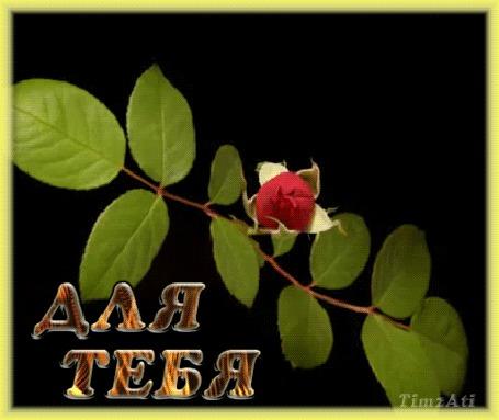 Анимация Красивая красная роза раскрывается (Для тебя), by tim2ati