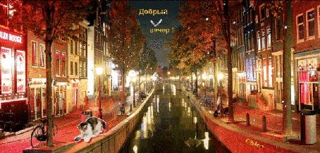 Анимация Ночной город в свете витрин и фонарей, роняет листву осеннюю с деревьев и освещает канал, лениво несущий свои воды, рядом котенок, затеявший игру, (Добрый вечер!), by Chloe