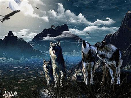 Анимация Стая волков где-то в горной местности, над которыми летают птицы