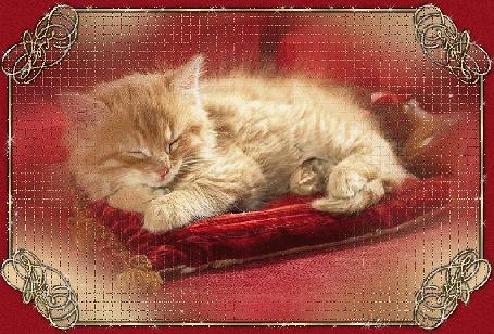 Анимация Рыжий котенок на красной бархатной подстилке окружен золотой мерцающей рамкой (Love / Любовь)