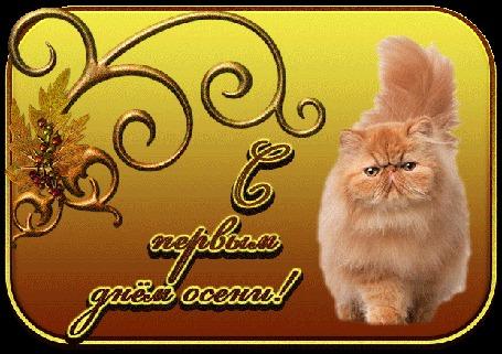 Анимация Пушистый рыжий персидский кот на желто-коричневом фоне с золотым осенним листом на рамочке (С первым днем осени!)