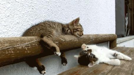 Анимация Котенок падает со скамьи, играя со своим спящим сородичем