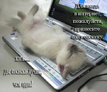 Анимация Белый котенок разлегся на клавиатуре ноутбука (Для входа в интернет, пожалуйста, принесите сосиску, хотя. две сосиски лучше, чем одна!), by a-zarina