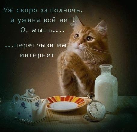 Анимация Рыжий кот читает молитву перед едой (Уж скоро за полночь, а ужина все нет! О, мышь, перегрызи им интернет)