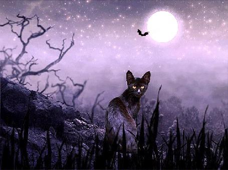 Анимация Черный кот на фоне ночного неба и полной луны, на которую летят летучие мыши