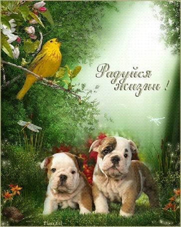 Анимация Два щенка бульдога на зеленой лужайке качают головами, над ними летают стрекозы, на цветущей ветке поет канарейка (Радуйся жизни - она так прекрасна!)