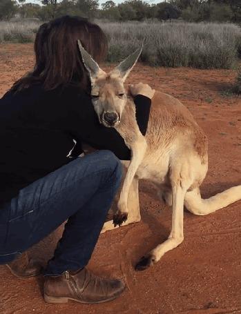 Анимация Девушка обнимает кенгуру
