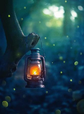 Анимация Горящий фонарь на дереве на фоне бликов