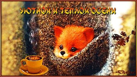 Анимация В кармане пиджака сидит лисенок и смотрит на чашку горячего кофе под дождем (Уютной и теплой осени)