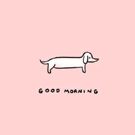 Анимация Проснувшаяся такса потягивается на светло - розовом фоне (good morning / доброе утро)