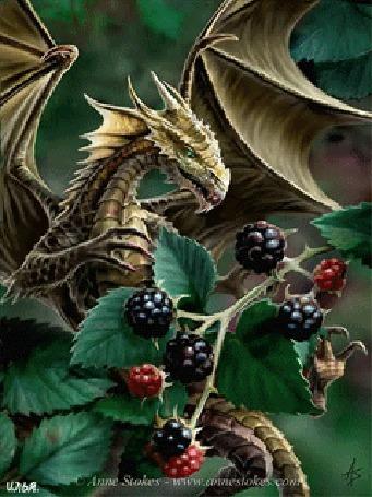 Анимация Дракон ест ягоды с ветки ягодного кустарника. Картинка автора Anne Stokes