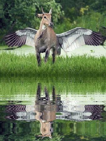 Анимация Крылатая антилопа у воды