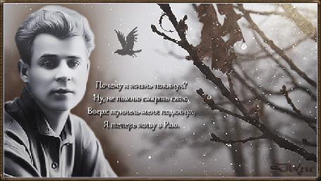 Анимация Сергей Есенин сидит у осеннего дерева. Над головой летает ворон, метет пурга. (Почему я жизнь покинул? Ну, не помню смерть свою, Вверх туннель меня подкинул, Я теперь живу в Раю.)