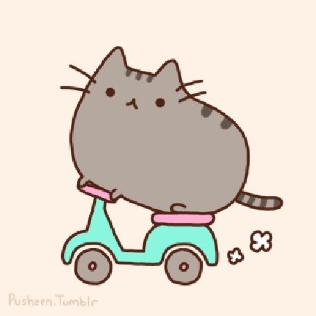Анимация Кот Pusheen / Пушин едет на скутере