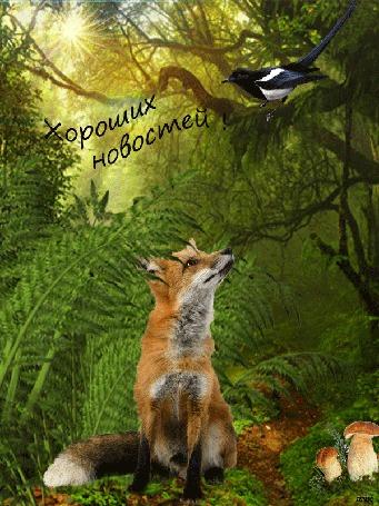 Анимация В лесу, на тропинке, под папоротником сидит лисенок, на дереве сорока, растут грибы, светит солнце (Хороших новостей!)