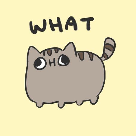 Анимация Смешной кот вопрошает Whaт? / Что?
