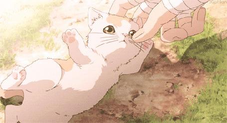 Анимация Котенок кусает палец руки
