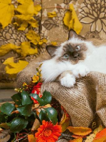 Анимация Кот лежит на мешковине на фоне осенних листьев