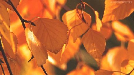 Анимация Веточки с осенними листьями раскачиваются от ветра